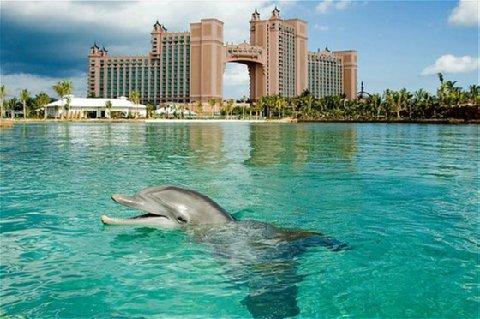 BAHAMAS - The Cove Atlantis Hotel - BRAVOCPAS - EDUARDO BRAVO LOSADA